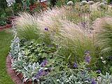 Esempio di Stipa Tenuissima in giardino