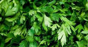 Le foglie del prezzemolo