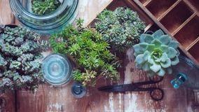 Giardino in barattoli di vetro riciclati
