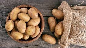 Coltivazione patata in bidone o sacco