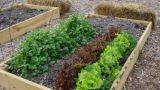 Lavori orto e giardino, mese di marzo