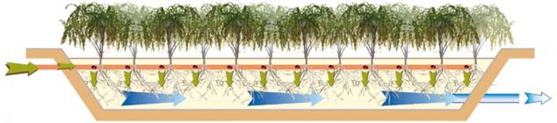 Impianto fitodepurazione verticale CARRA