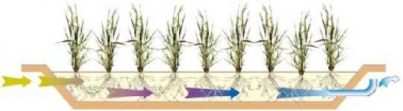 Impianto fitodepurazione orizzontale CARRA