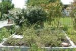 Impianto di fitodepurazione per il recupero delle acque reflue di CARRA