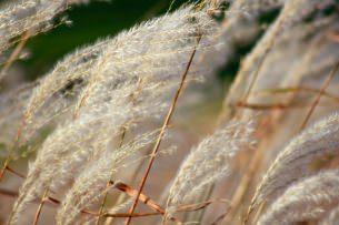 impermeabilizzanti ricavati da fibre vegetali