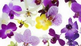 Curare l'orchidea
