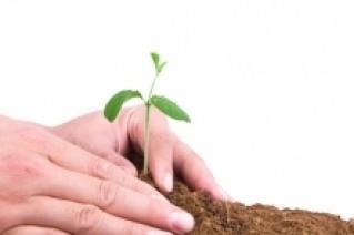 coltivare la salvia