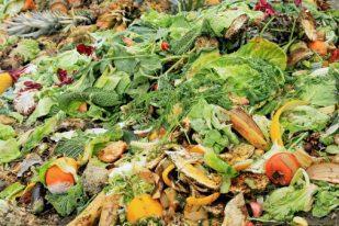 produzione biomassa