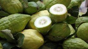 Coltivazione Citrus Medica