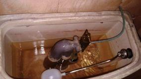 Sostituzione del gommino di scarico del water