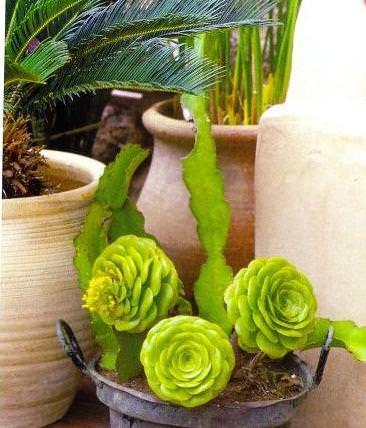 Serra in casa for Serra piante grasse