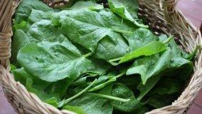 Coltivazione invernale degli spinaci