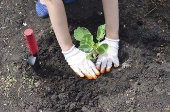 lavori nell'orto di febbraio: semina