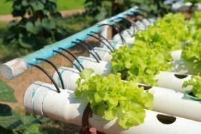coltivazione idroponica delle piante