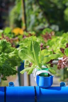 vantaggi coltivazione idroponica