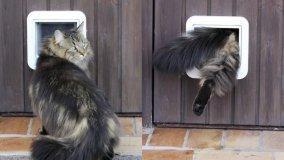 Porta per gatti