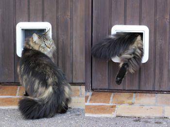 Porta per gatti - Porta per gatti ...