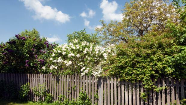 Come realizzare un giardino profumato - Realizzare un giardino ...