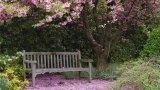 Ciliegi da fiore per piccoli giardini