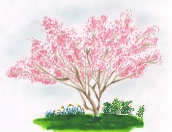 Cliegio in fiore, narcisi, muscari, rosa