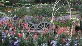 Giardino perenne
