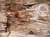 L'aggressione delle termiti molto dannosa
