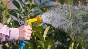 Sanzioni penali per annaffiatura piante su balcone