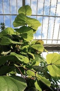 Giardino d'inverno - Piante