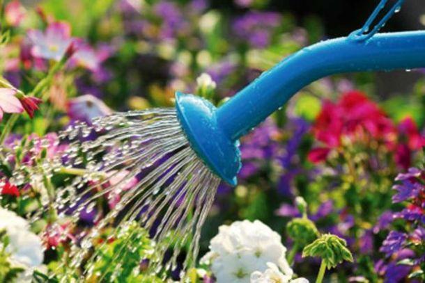 annaffiare le piante in estate