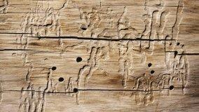 Patologie degli elementi strutturali in legno