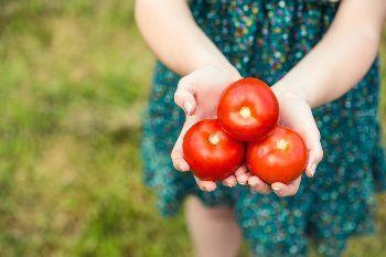 pomodori dell'orto di luglio