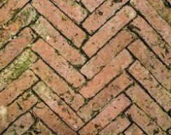 attacco di microrganismi su pavimento