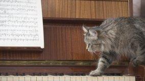 Case a misura di gatto