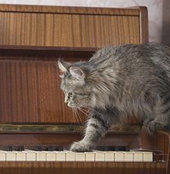 I gatti amano esplorare e appropriarsi di ogni angolo della casa!