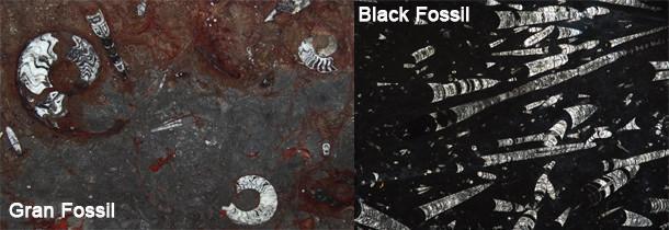 Due esempi di pietre naturali caratterizzate dalla presenza di numerosissimi fossili perfettamente conservati.