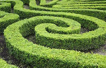 Nei giardini alla francese si trovano spesso anche veri e propri labirinti di siepi.