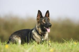 offendicul: animali addestrati