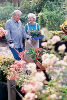 tempo da dedicare giardino bassa manutenzione