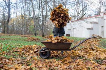 autunno nei giardini a bassa manutenzione
