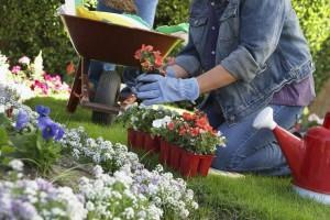 buoni lavoro per giardinaggio