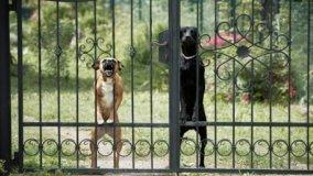 Responsabilità civile per i danni causati da animali domestici