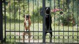 Danni causati da animali domestici: responsabilità civile