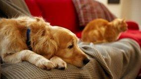 Casa abitata da animali: prodotti specifici per la pulizia