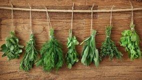 Coltivazione erbe aromatiche