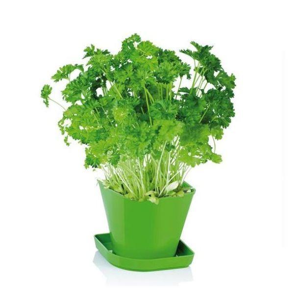 Erbe aromatiche for Erbe aromatiche in vaso