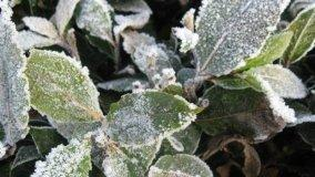 Come proteggere le piante dal gelo