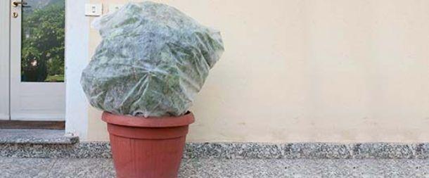 tnt per piante contro il gelo