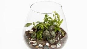Come creare un piccolo giardino in un contenitore di vetro