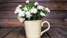 Cura dei fiori e delle piante per il verde in casa