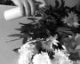 Verde in casa e fiori recisi
